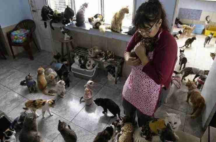 Στη δουλειά της η Μαρία Τορέρο φροντίζει άρρωστους ανθρώπους. Στο σπίτι της, χαρίζει αγάπη σε 175 ετοιμοθάνατες γάτες.
