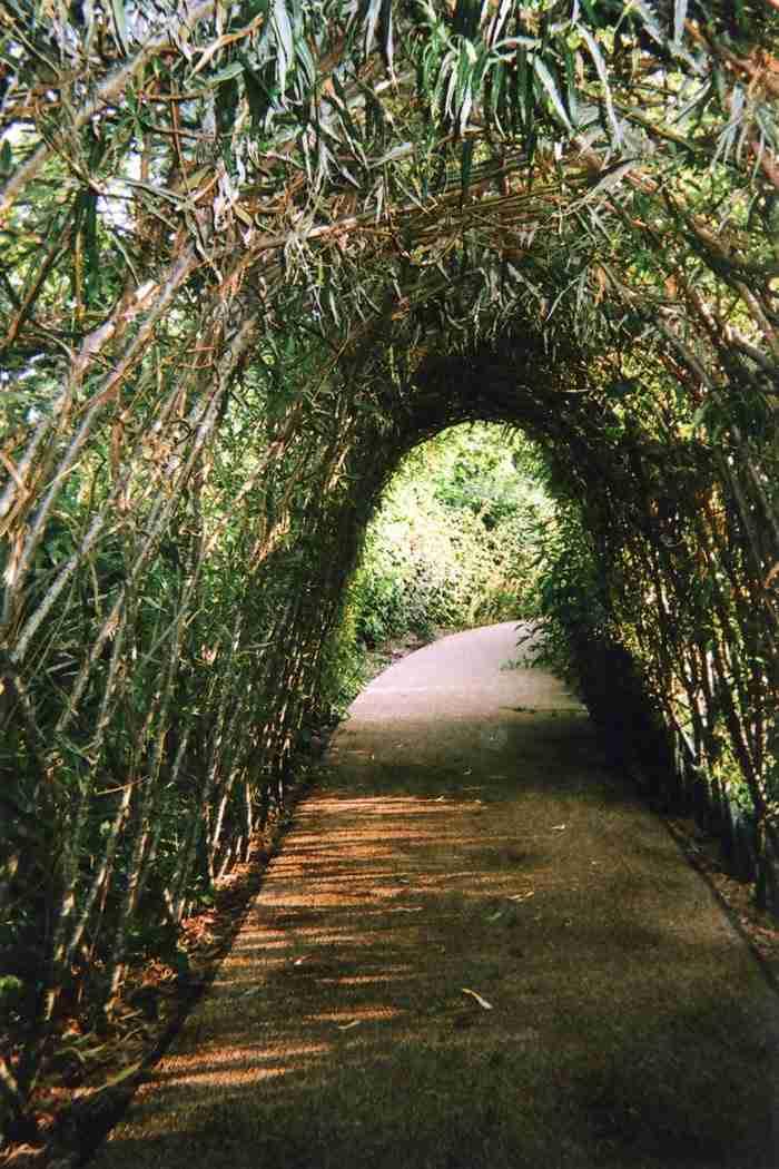 """Το «Τούνελ της φύσης"""" ή το """"Φως στο τέλος"""" της Ellen Rostant"""
