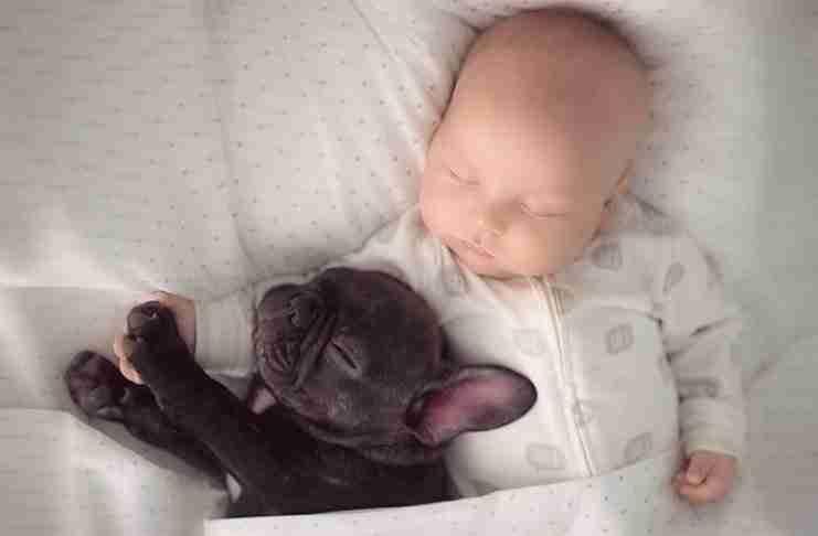 Όταν η μητέρα και φωτογράφος Υβέτ Ίβενς γνώρισε ένα μικρό κουτάβι που γεννήθηκε την ίδια μέρα με τον γιο της Ντίλαν, ήξερε ότι έπρεπε να τον πάρει μαζί της σπίτι.