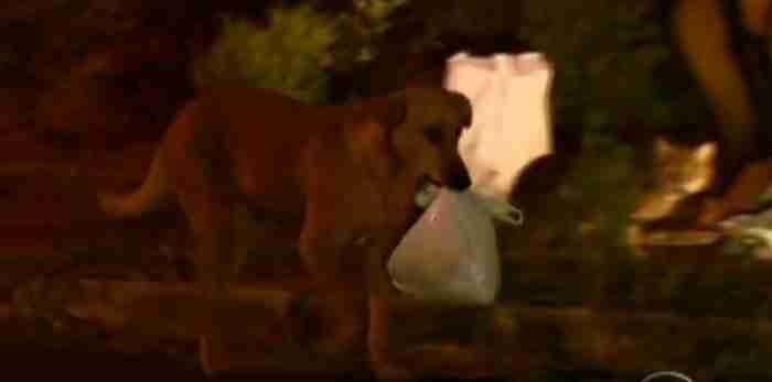 Κάθε μέρα η Λιλίκα περπατούσε μια απόσταση ενός μιλίου κρατώντας στο στόμα της το πακέτο με το φαγητό.