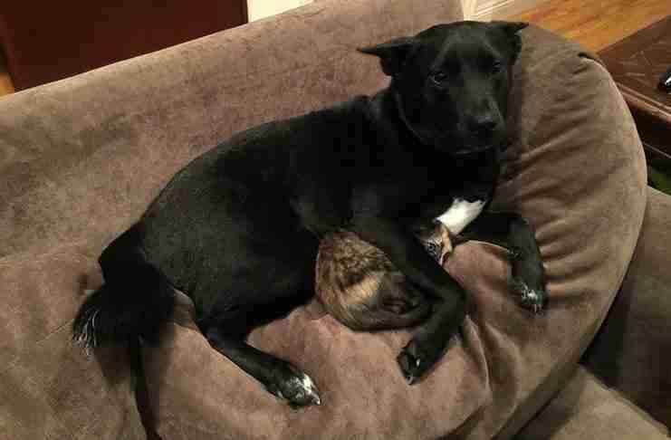 Ο σκύλος του είχε αγκαλιάσει το φοβισμένο γατάκι σαν να προσπαθούσε να το προστατέψει από τους κεραυνούς.