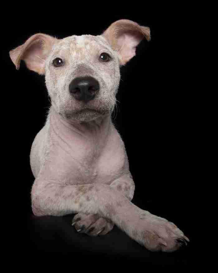 Φωτογράφος αποδεικνύει ότι και τα ζώα με ειδικές ανάγκες χρειάζονται σπίτι. Ίσως και περισσότερο..