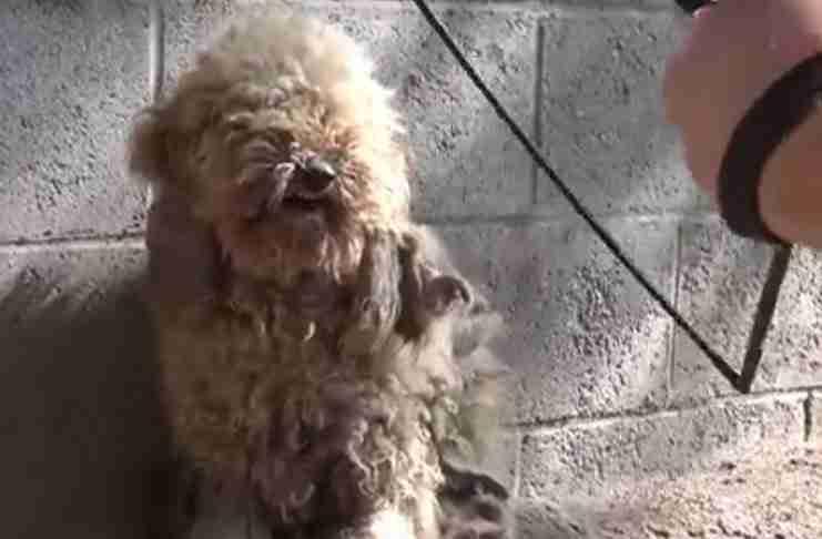 Διέσωσαν ένα τρομοκρατημένο σκυλάκι και το μεταμόρφωσαν! Πρέπει να το δείτε πως έγινε!