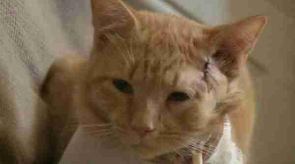 Ηρωική γάτα δέχτηκε σφαίρα για να σώσει ένα τρίχρονο αγοράκι