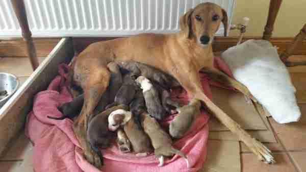 Δεν είναι απλά μια σκυλίτσα με τα κουταβάκια της.. Διαβάστε την συγκινητική ιστορία της