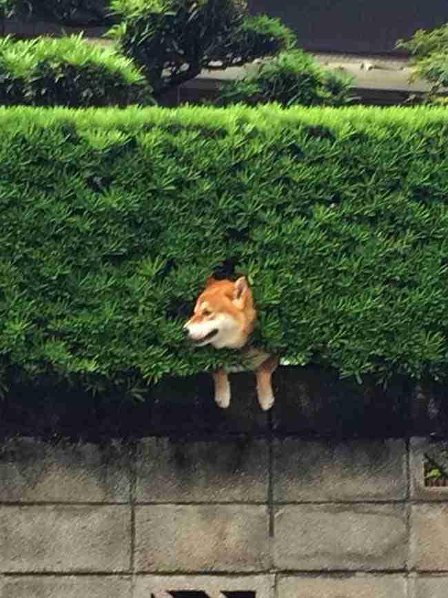 Αυτό το σκυλί που κόλλησε στο φράχτη δείχνει πόσο σημαντικό είναι να βλέπεις τα πάντα θετικά