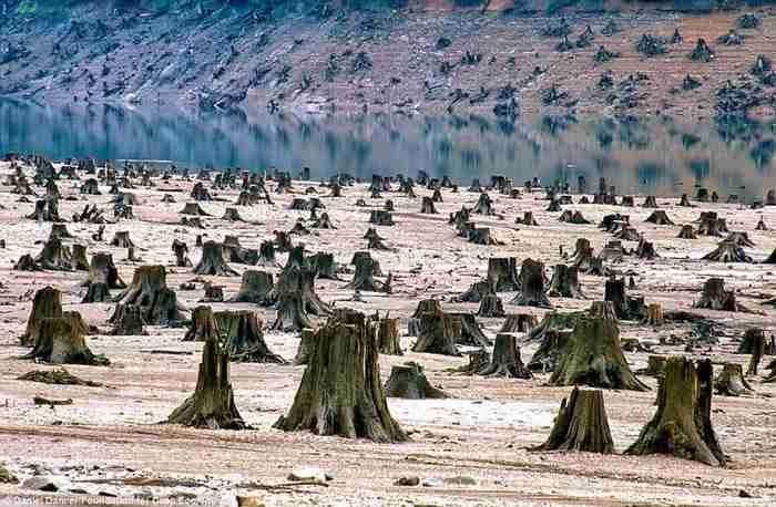 Στο Όρεγκον, αυτό το δάσος ηλικίας 1000 ετών έπεσε θύμα της κατασκευής ενός νέου φράγματος.