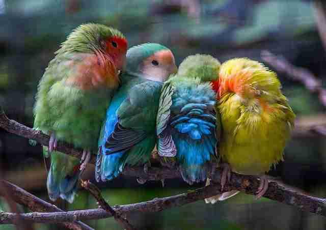 Πουλιά αγκαλιασμένα τρυφερά στο φακό! Πανέμορφες εικόνες!