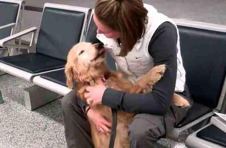 Αυτή η σκυλίτσα δεν μπορεί να σταματήσει να κλαίει από χαρά μόλις βλέπει ξανά την ιδιοκτήτρια του!