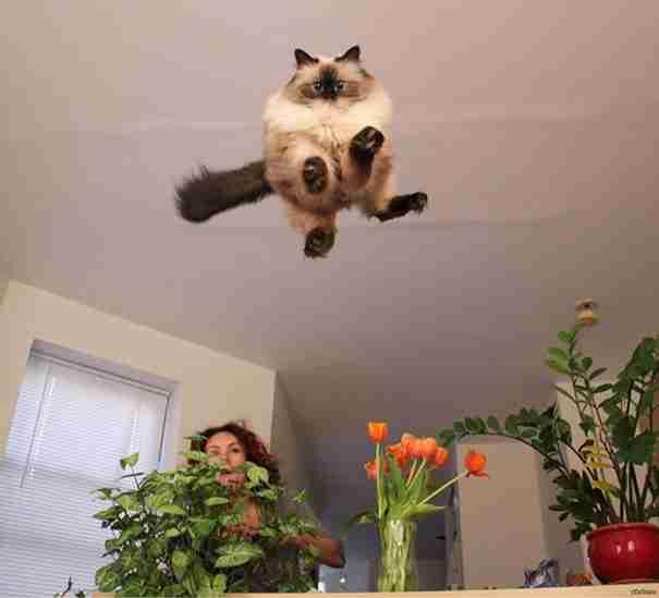 25 αστείες γάτες στις πιο τέλεια χρονομετρημένες φωτογραφίες που είδατε ποτέ!