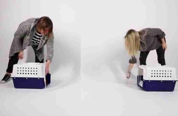Τι θα συμβεί αν τοποθετήσετε ένα κλουβί με γατάκια απέναντι από ένα κλουβί γεμάτο κουταβάκια; Απλά δείτε..