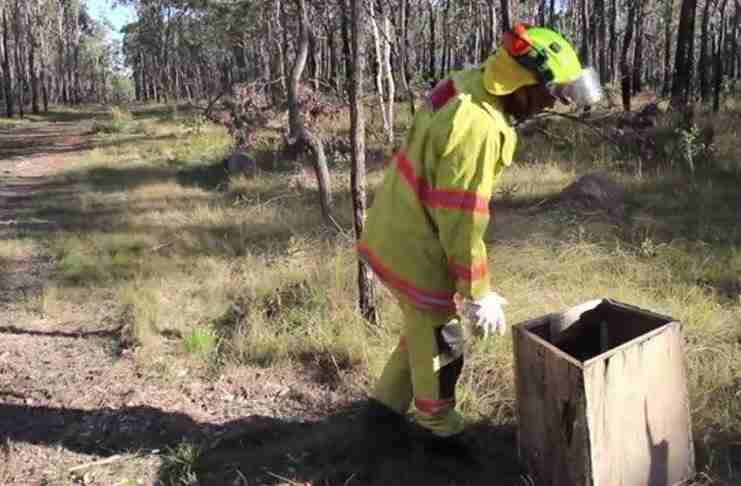 Ένας πυροσβέστης βρήκε στο δάσος ένα πεταμένο κουτί. Αυτό που υπήρχε μέσα άλλαξε τη ζωή του!