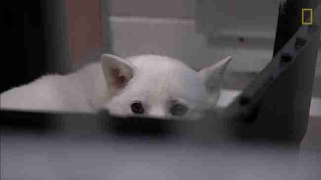 Μεγάλωσαν αυτό το σκυλί για να το πουλήσουν για κρέας. Δείτε πόσο φοβισμένο είναι..