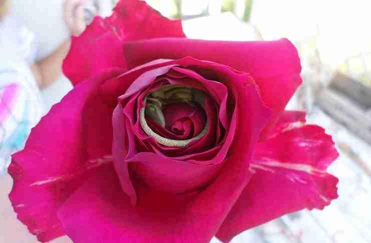 Ένα κoριτσάκι πήγε ένα τριαντάφυλλο στη μαμά του. Αλλά δείτε τι υπήρχε μέσα!