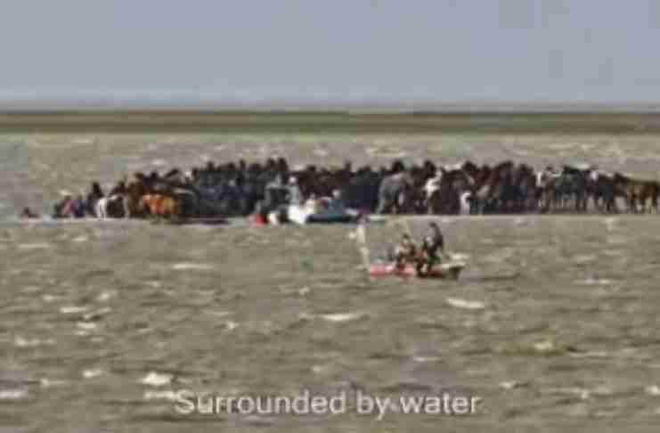 Μια θύελλα παγίδευσε 100 άλογα σε ένα νησί. Αυτό που έκαναν 7 γενναίες γυναίκες για να τα σώσουν είναι μοναδικό!