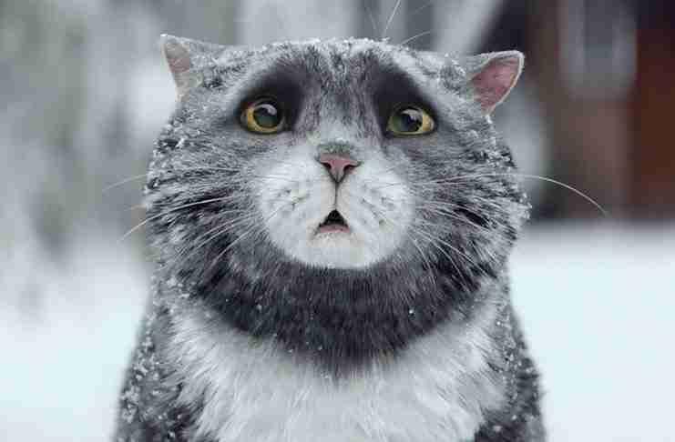 Αυτό το βίντεο με μια γάτα που καταστρέφει τα.. πάντα, θα σας βάλει στο πνεύμα των Χριστουγέννων!
