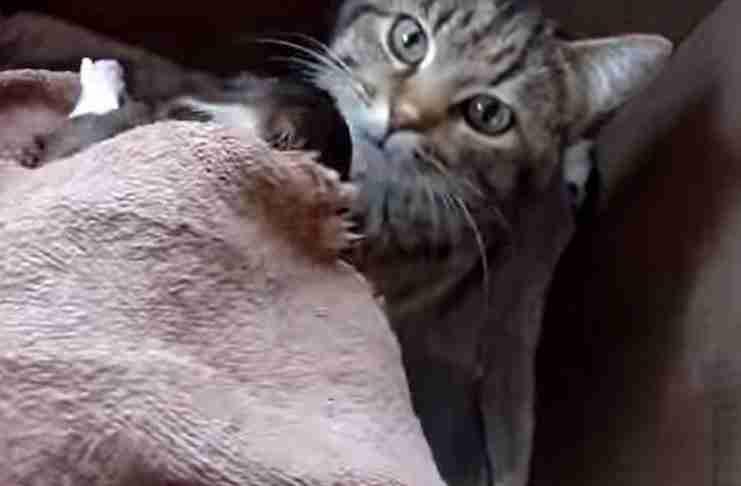 Έβαλαν ένα μικρό κουτάβι δίπλα σε μια γάτα. Η αντίδραση της γάτας; Απίστευτη!