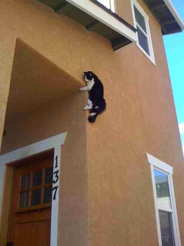 25 γάτες που μάλλον μετάνιωσαν αμέσως για τις άσχημες επιλογές τους..