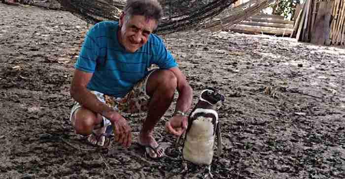 Τα ζώα νιώθουν ευγνωμοσύνη; Δείτε τι κάνει αυτός ο πιγκουίνος στον άνθρωπο που τον έσωσε!