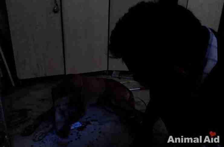 Αυτό το σκυλί πήγε σε ένα υπόγειο για να πεθάνει. Αλλά έγινε το θαύμα..