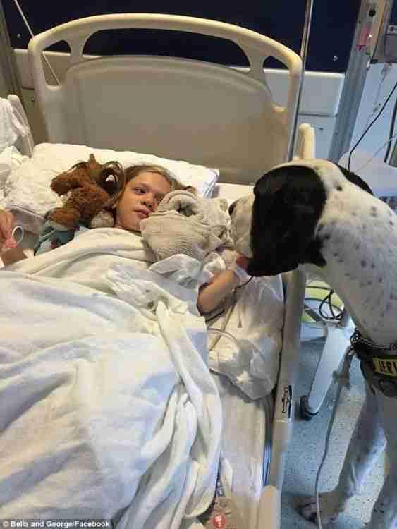 Αυτό το σκυλί βοήθησε ένα μικρό κοριτσάκι να περπατήσει ξανά μετά από 9 χρόνια