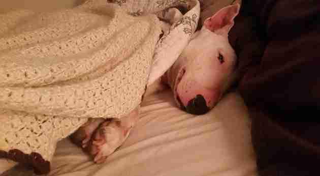 Έζησε όλη του τη ζωή κλεισμένο σε κλουβί. Προσέξτε αντίδραση μόλις ανεβαίνει για πρώτη φορά σε κρεβάτι!