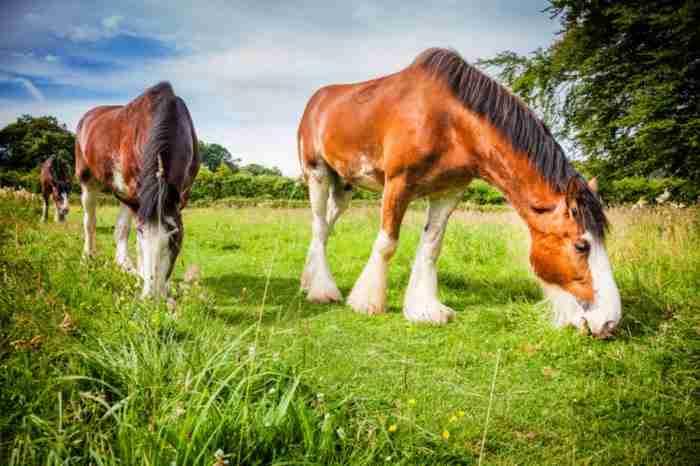 13 όμορφες ράτσες άλογων που μέχρι σήμερα δεν ξέρατε ότι υπήρχαν