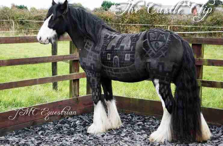 Αν νομίζετε ότι τα άλογα δεν μπορούν να γίνουν ομορφότερα δείτε τι έκαναν αυτοί οι άνθρωποι