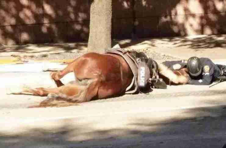 Ο σπαρακτικός αποχαιρετισμός αστυνομικού στο άλογο του την ώρα που ξεψυχούσε μετά από σύγκρουση με φορτηγό.