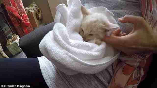 Μια οικογένεια βρήκε ένα άψυχο γατάκι θαμμένο στο χιόνι και το επανέφερε στη ζωή