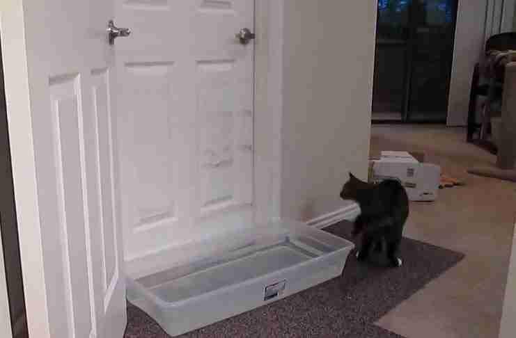 Επειδή ο γάτος τους άνοιγε συνέχεια τις πόρτες έβαλαν μπροστά μια λεκάνη με νερό. Το αποτέλεσμα;