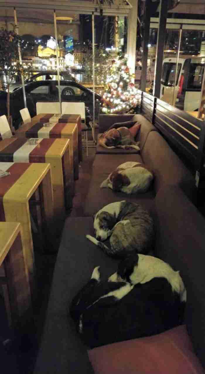 Ιδιοκτήτες καφετέριας στη Λέσβο όταν φεύγουν οι πελάτες, ανοίγουν τις πόρτες στους αδέσποτους σκύλους της πόλης