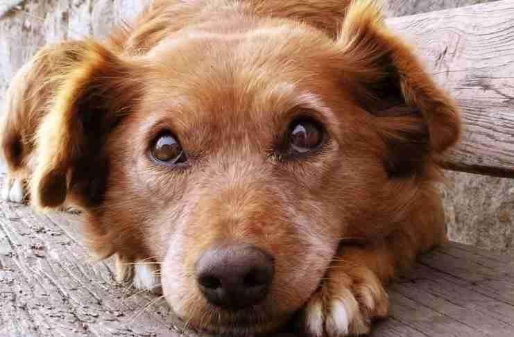 20 πράγματα που δεν πρέπει να ξεχάσει ποτέ όποιος έχει σκύλο