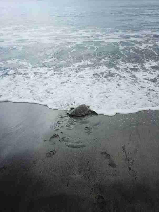 Αγοράζει χελώνες που προορίζονται για κατανάλωση και τις απελευθερώνει στη θάλασσα