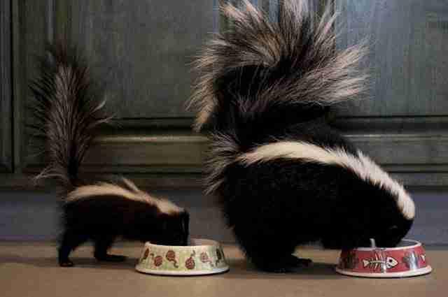 """28 ζώα με τις αξιολάτρευτες μικροσκοπικές """"εκδοχές"""" τους. Το Νο7 δεν μοιάζει ψεύτικο;"""