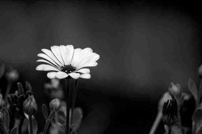 24 ασπρόμαυρες φωτογραφίες που θα σας κόψουν την ανάσα