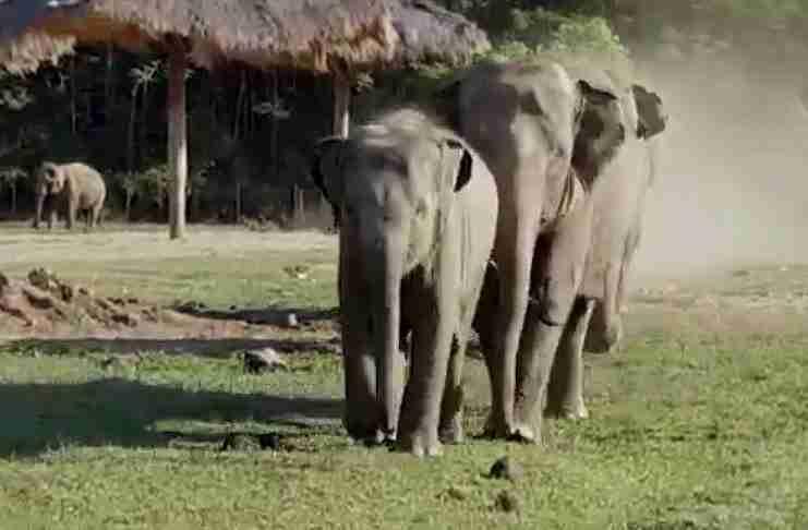 Κάθε πρωί ένα μωρό ελέφαντας τρέχει να υποδεχθεί αυτόν τον άντρα. Αυτή είναι αγάπη!