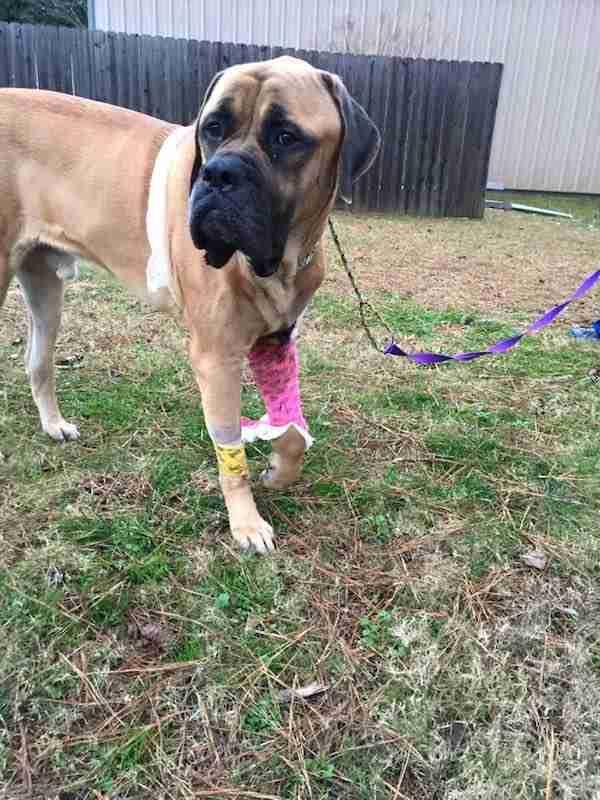 Δύο αδέσποτα, άρρωστα σκυλιά συναντήθηκαν στο νοσοκομείο και παρηγορεί το ένα το άλλο.
