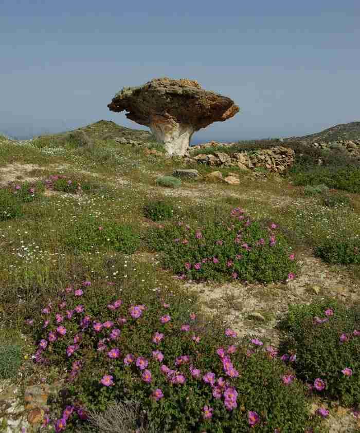 Ένα σπάνιο φυσικό μνημείο στην Κίμωλο: Ένα τεράστιο πέτρινο μανιτάρι!