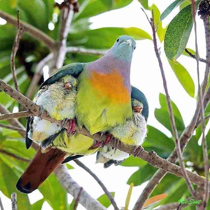 25 υπέροχες φωτογραφίες πτηνών που φροντίζουν τα μικρά τους..