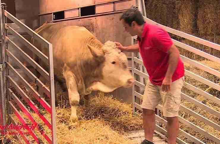 Η απίστευτη αντίδραση ενός ταύρου που βλέπει άχυρα για πρώτη φορά!