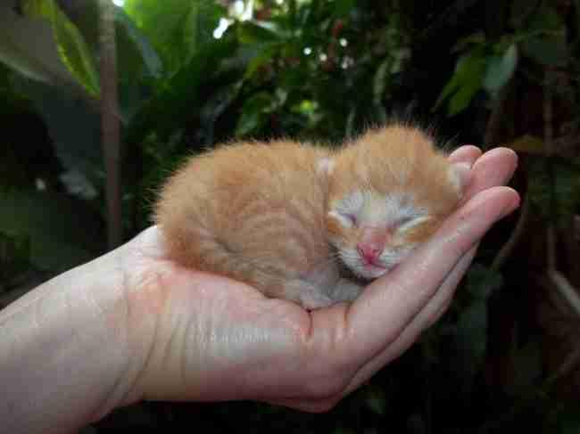 25 αξιολάτρευτα μωρά ζώα που κυριολεκτικά.. χωρούν στη παλάμη του χεριού σας