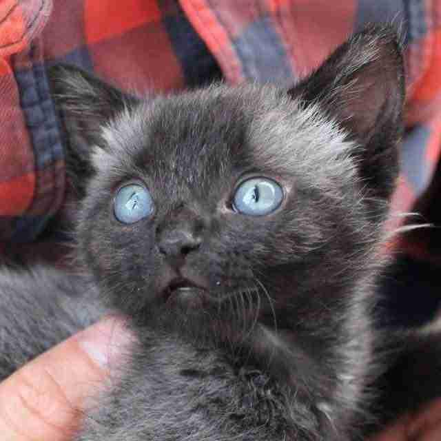 Στην αρχή νόμιζε ότι ήταν αρουραίος. Όταν πλησίασε όμως κατάλαβε ότι ήταν ένα γατάκι που ήθελε βοήθεια..