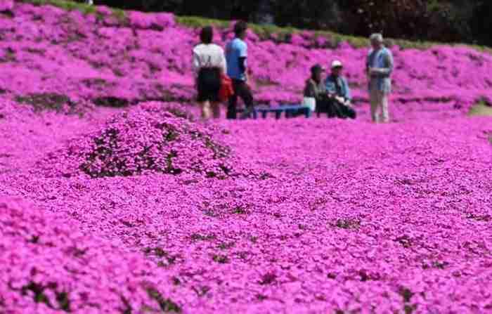 Πέρασε δυο χρόνια φυτεύοντας χιλιάδες λουλούδια για να τα μυρίζει η τυφλή σύζυγός του