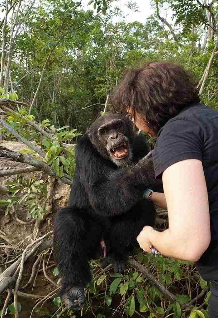 Αυτός είναι ο πιο μοναχικός χιμπατζής στον κόσμο.. Και το μόνο που θέλει είναι έναν φίλο!.