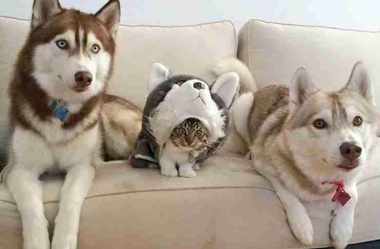 17 παμπόνηρες γάτες που νομίζουν ότι κρύφτηκαν στο ιδανικό σημείο!