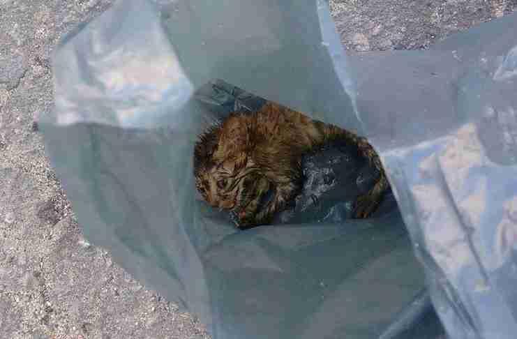 Μια δασκάλα βρήκε αυτό το γατάκι να κλαίει κλεισμένο σε μια σακούλα σκουπιδιών.. Αυτή η ιστορία ραγίζει καρδιές