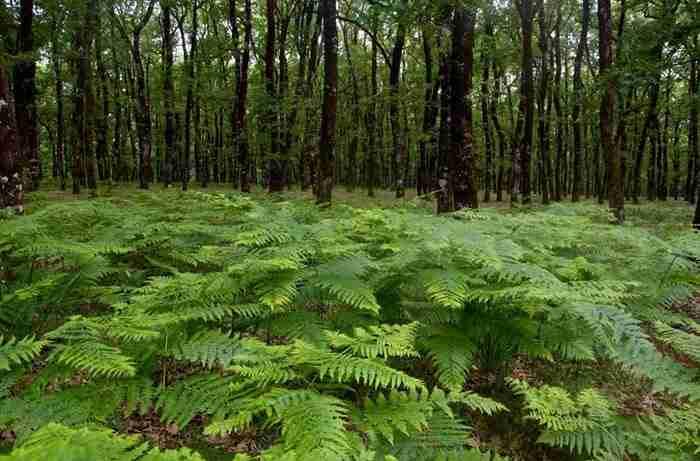 Ένα από τα μεγαλύτερα δάση βελανιδιών βρίσκεται στην στην καρδιά της Πελοποννήσου