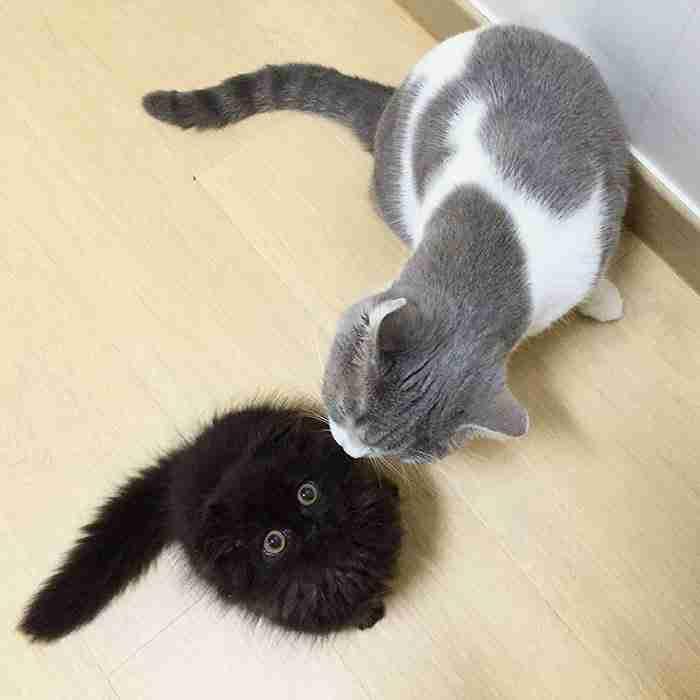 Αυτός είναι ο Gimo. Η γάτα με τα μεγαλύτερα μάτια στον κόσμο!