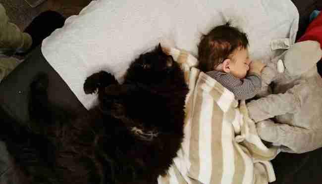 Αυτή η γάτα αγάπησε το μωρό πριν ακόμη γεννηθεί. Τώρα το προσέχει όλη την ώρα!